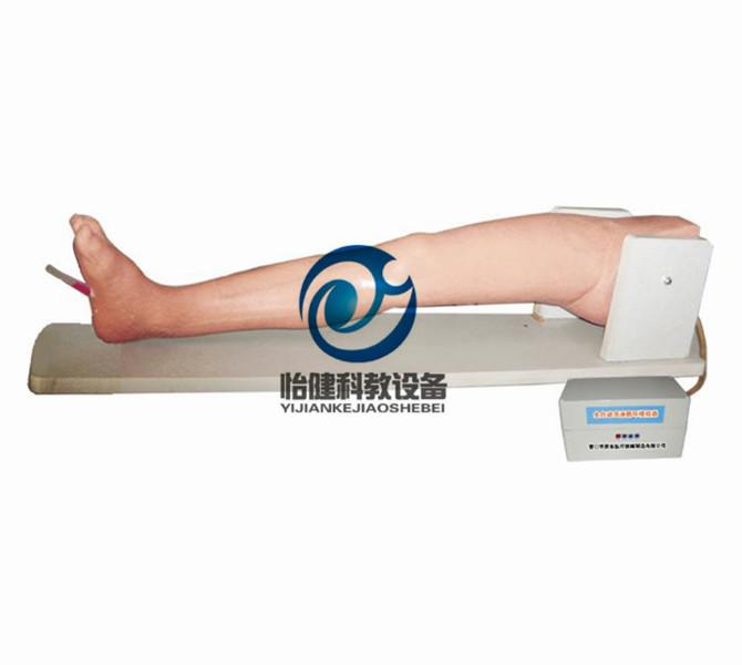 骨髓穿刺及股动、股静脉穿刺模型