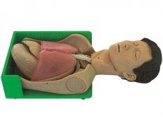 透明洗胃、胃肠减压仿真标准化病人